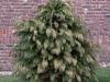 Pflanzen-Buesche-Foto_Textur_B_P1018651
