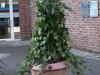 Pflanzen-Buesche-Foto_Textur_B_P1179333