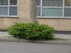 Pflanzen-Buesche-Foto_Textur_B_P4131064
