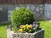 Pflanzen-Buesche-Foto_Textur_B_P4212533