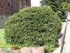 Pflanzen-Buesche-Foto_Textur_B_P4212535