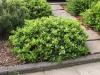Pflanzen-Buesche-Foto_Textur_B_P4222572
