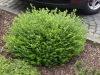 Pflanzen-Buesche-Foto_Textur_B_P4222573