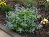 Pflanzen-Buesche-Foto_Textur_B_P4222574