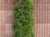 Pflanzen-Buesche-Foto_Textur_B_P5022096