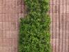 Pflanzen-Buesche-Foto_Textur_B_P5022097
