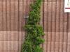 Pflanzen-Buesche-Foto_Textur_B_P5022100