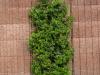 Pflanzen-Buesche-Foto_Textur_B_P5022102