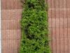 Pflanzen-Buesche-Foto_Textur_B_P5022103