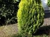 Pflanzen-Buesche-Foto_Textur_B_P5022115