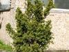 Pflanzen-Buesche-Foto_Textur_B_P5022123