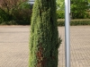 Pflanzen-Buesche-Foto_Textur_B_P5042422