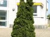 Pflanzen-Buesche-Foto_Textur_B_P5042445