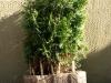 Pflanzen-Buesche-Foto_Textur_B_P5072579