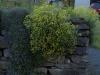 Pflanzen-Buesche-Foto_Textur_B_P5122701