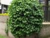 Pflanzen-Buesche-Foto_Textur_B_P5142758