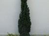 Pflanzen-Buesche-Foto_Textur_B_P6025957