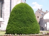 Pflanzen-Buesche-Foto_Textur_B_P6137481