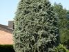 Pflanzen-Buesche-Foto_Textur_B_P6143364