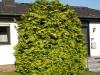 Pflanzen-Buesche-Foto_Textur_B_P6143374