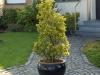 Pflanzen-Buesche-Foto_Textur_B_P6153420