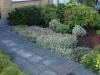 Pflanzen-Buesche-Foto_Textur_B_P6153421