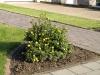Pflanzen-Buesche-Foto_Textur_B_P6153422