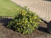 Pflanzen-Buesche-Foto_Textur_B_P6153423