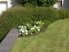 Pflanzen-Buesche-Foto_Textur_B_P6153424