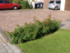 Pflanzen-Buesche-Foto_Textur_B_P6153425