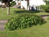Pflanzen-Buesche-Foto_Textur_B_P6153427