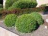 Pflanzen-Buesche-Foto_Textur_B_P6153429