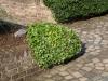 Pflanzen-Buesche-Foto_Textur_B_P6153431