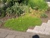 Pflanzen-Buesche-Foto_Textur_B_P6153441