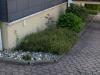 Pflanzen-Buesche-Foto_Textur_B_P6153459