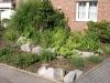 Pflanzen-Buesche-Foto_Textur_B_P6153473