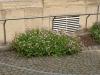 Pflanzen-Buesche-Foto_Textur_B_P6153502