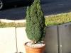 Pflanzen-Buesche-Foto_Textur_B_P6193517