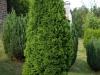 Pflanzen-Buesche-Foto_Textur_B_P6193522