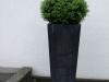 Pflanzen-Buesche-Foto_Textur_B_P6213523