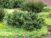 Pflanzen-Buesche-Foto_Textur_B_P6213524