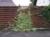 Pflanzen-Buesche-Foto_Textur_B_P6213525