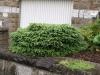 Pflanzen-Buesche-Foto_Textur_B_P6213528
