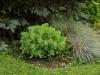 Pflanzen-Buesche-Foto_Textur_B_P6213529