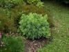 Pflanzen-Buesche-Foto_Textur_B_P6213531