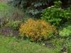 Pflanzen-Buesche-Foto_Textur_B_P6213532