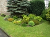 Pflanzen-Buesche-Foto_Textur_B_P6213533