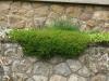 Pflanzen-Buesche-Foto_Textur_B_P6213545