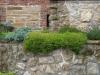 Pflanzen-Buesche-Foto_Textur_B_P6213546