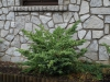 Pflanzen-Buesche-Foto_Textur_B_P6213552